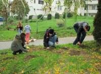 Sázení cibulovin na školním dvoře