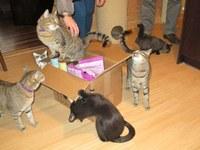 Studentská sbírka pro kočky
