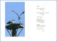 Křídla i okovy